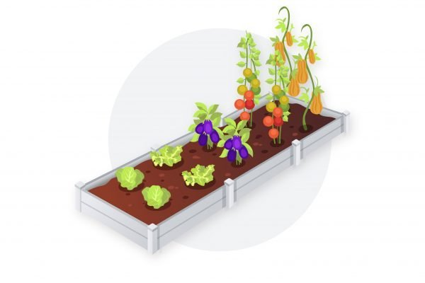 A large full raised bed with vegetables