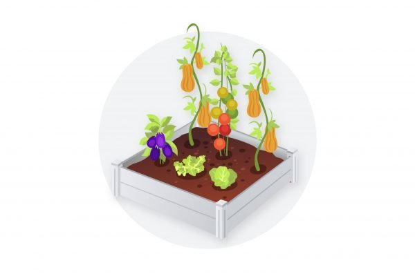 A small white raised bed in white full of vegetables