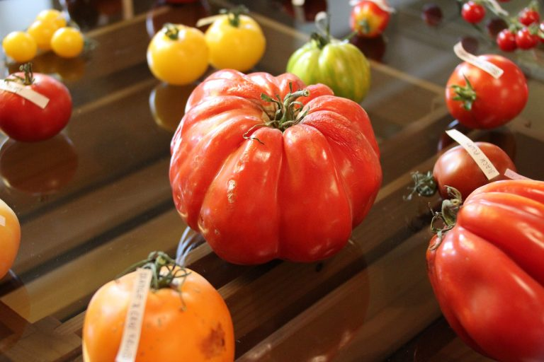 An assortment of heirloom tomatoes