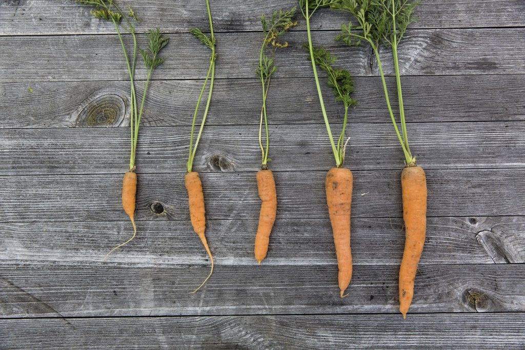 Carrots of various sizes arranged on a wood surface